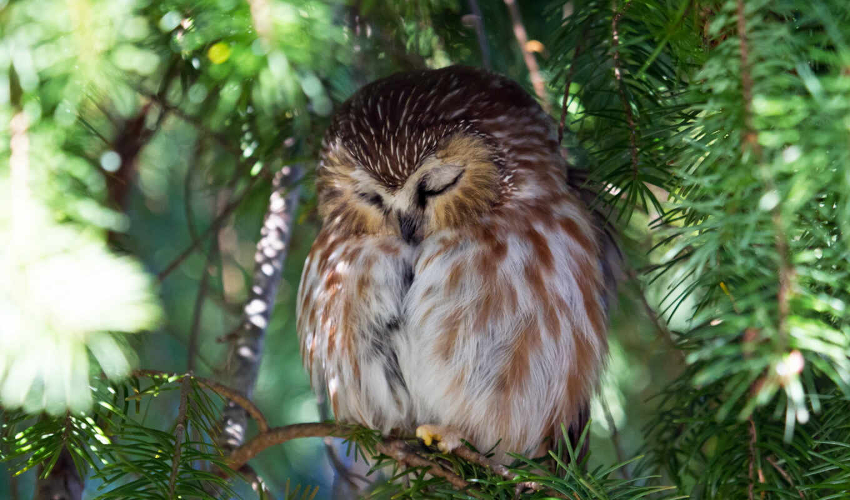 сова, winter, совы, птица, load, хищник, птицы, филин, graffiti, art,