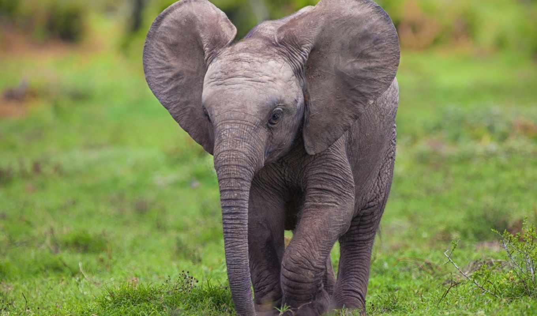 zoo, николаевский, слон, слона, thursday, собирается, потратить, тысяч, гривен, они,