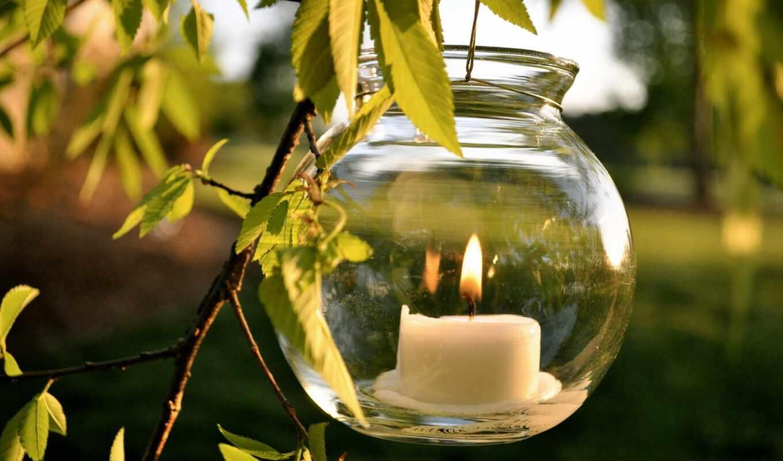 природа, свеча, день, лист, birth