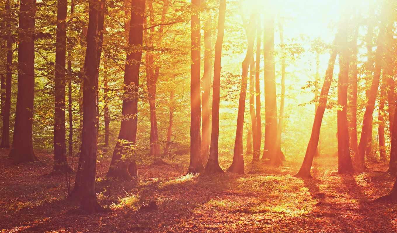 природа, свет, лес, деревья, солнце, vragen,