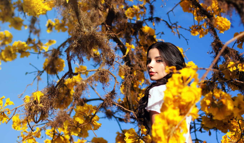 дерево, девушки, девушка, tags, осень, показать, девушек, красивых, количество,