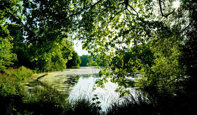 leto, park, пруд, ax, трава,