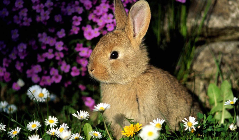 кролик, cvety, трава, уши, daler, nice, цветах, малыш, shadow, кролики,