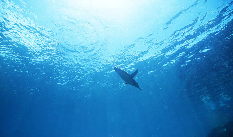 пингвин, зелёный, песок, пингвины, котики, морские, может, стоимость, вычислить, единственная,