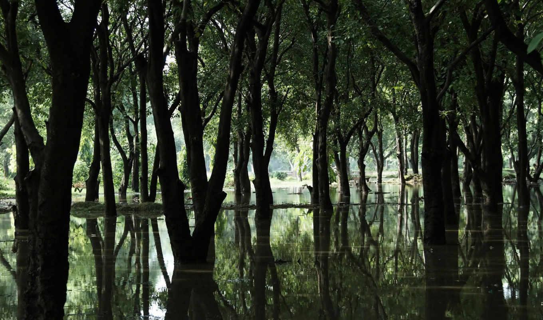 hd, вода, лес, wallpaper, болото, деревья, wallpapers, forest, nature, pc, desktop, смотрите, swamp,