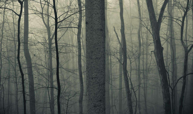 лес, тихо, мистично, серо, iphone,