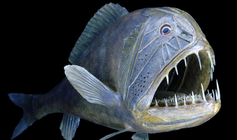обитатели, подводные, underwater, мира, world, подводного, моря, глубин, мрачных, свой,