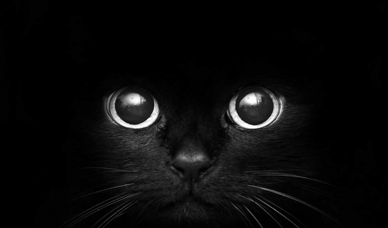 аватарки, красивые, кот, морда, глаза,