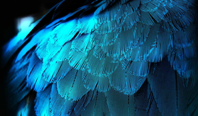 перья, перо, макро, павлина, крыло, синяя, синей, feathers, подсветкой, синие,
