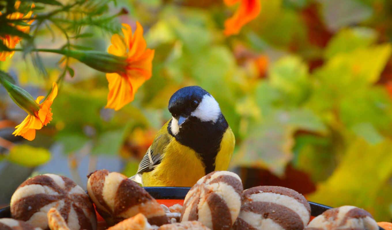птица, tit, finch, природа