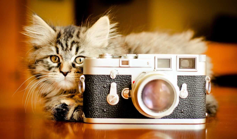 фотоаппарат, кошка, котенок, фон, за, кошки,