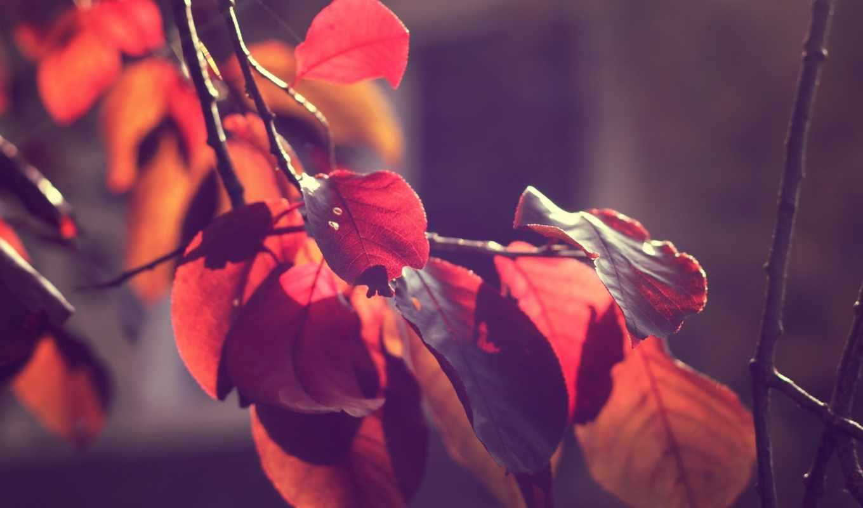 свет, листья, ветки, orange, осенние, природа, hipster,