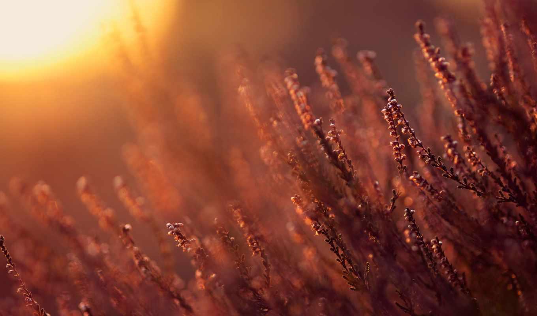 sun, glare, свет, cvety, тепло, wide, солнце, природа,