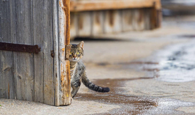 кот, улица, zhivotnye, картини, монитора, рисунки, бесплатные, заставки, фоновые,