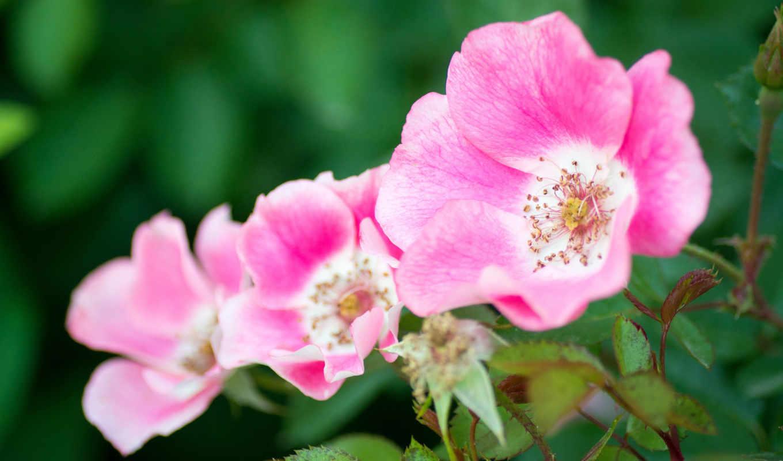 цветы, дивные, свой, community, целикомв, цитатник, сообщения, прочитать, бе, цитата,