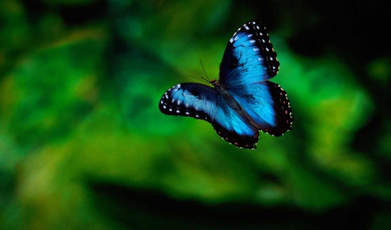 бабочки, бабочка, красивые,