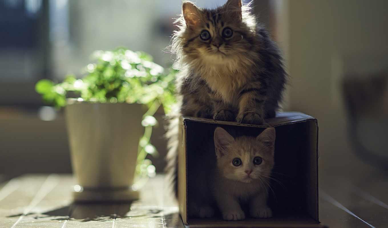 планшета, телефона, ноутбука, котята, torode, box, кошки,