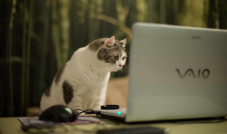 кошка, компьютер,