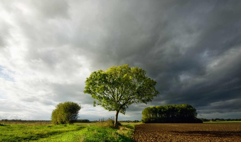 поле, дерево, облака, трава, небо, тучи, картинка,