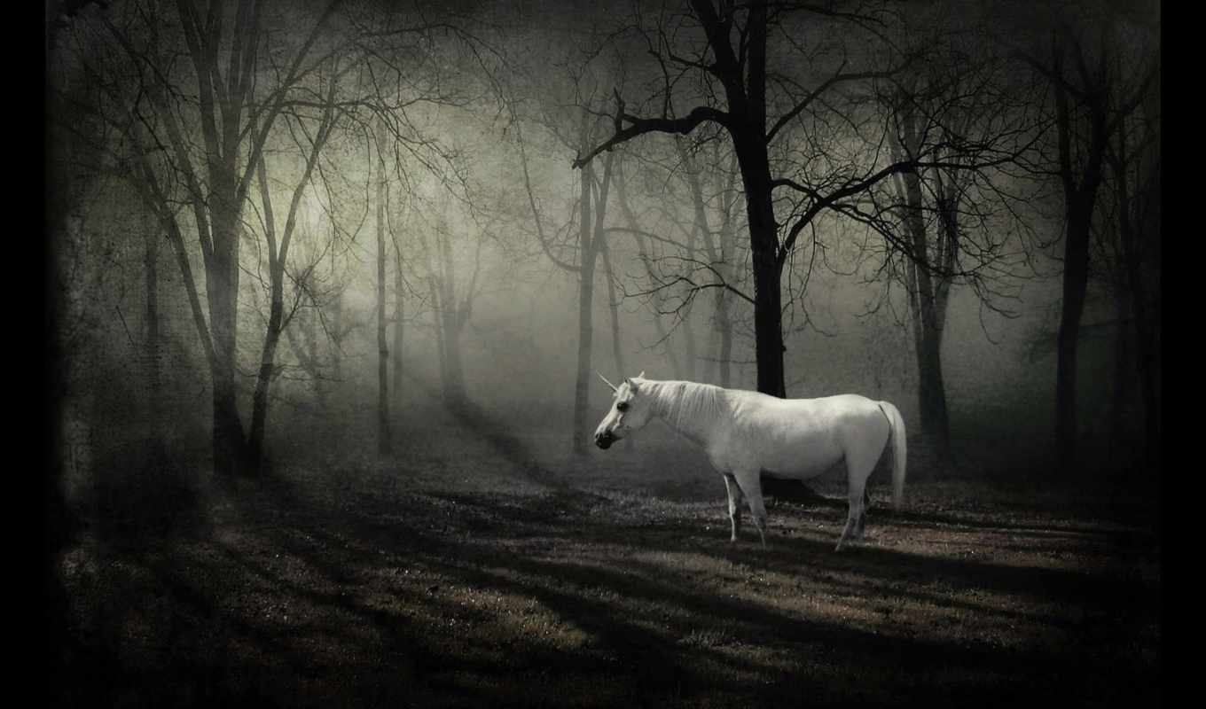 unicorn, forest, dark, download, with, last, picture,