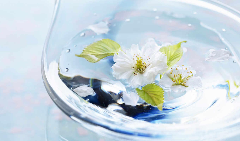 water, растительность, воды, капли, glass, цветы, травы, воде, зелёными,