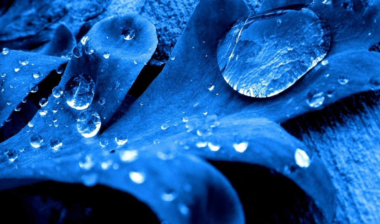 синий, капли, лист, desktop, leaf, drops, wall, pack, similar, category,