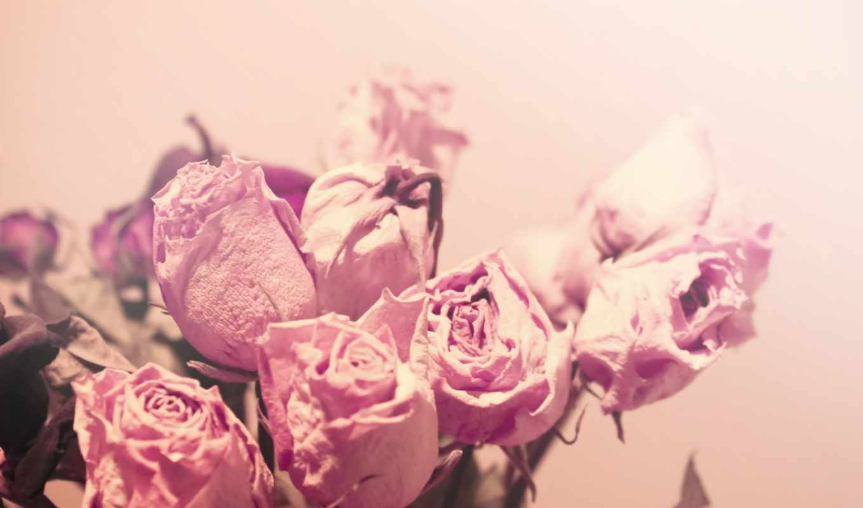 цветы, color, нежность, макро, розы, свет,