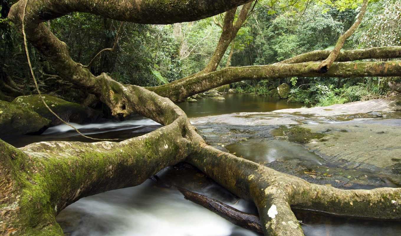 дерево, pack, разных, brazil, rio, janeiro, brasil, cachoeiras,