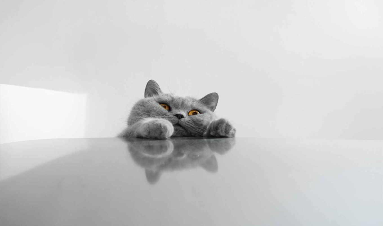 кот, серый, лапы, положил, морда, таня,