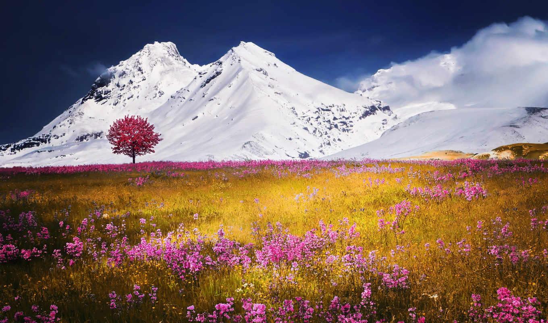 natural, flowers, природа, images, desktop, цветы,