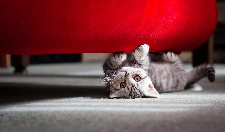котенок, диван, кот, под, playing, спина, free,