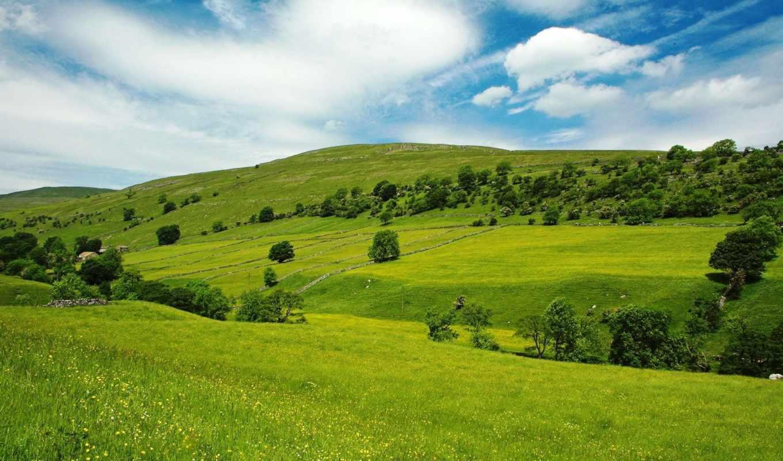 поле, зеленое, margin, луга, природа, trees, зеленые, небо, трава,