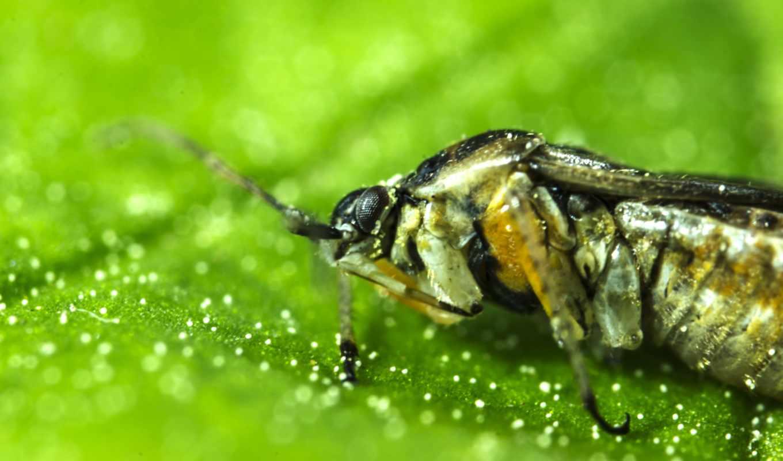 пчела, листик, насекомое, зелень,