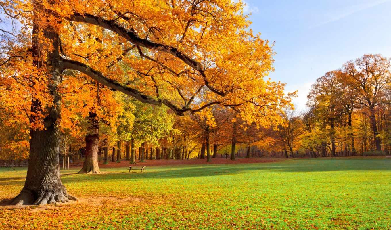 park, пейзаж, autumn, природа, scenery, деревья, листья, трава, resolution, download,