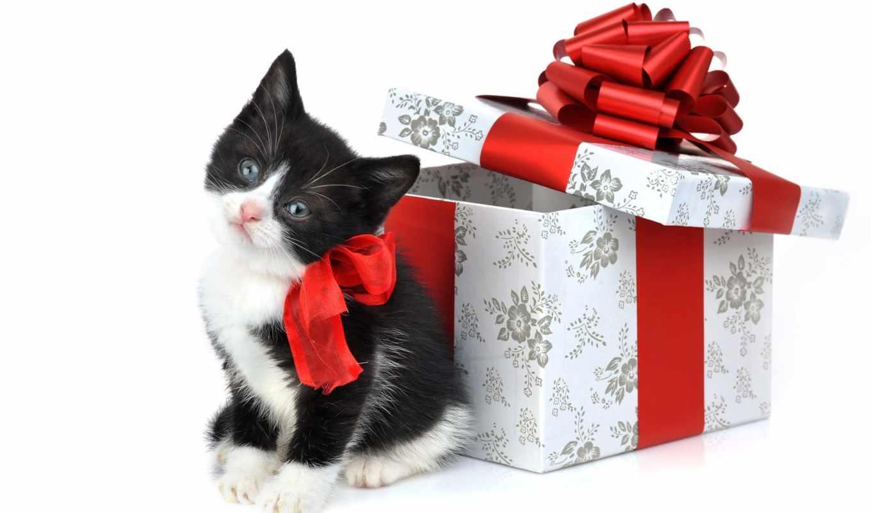 котенка, кошки, полезной, кошками, уходу, секреты, доме, воспитания, информации, раскрывает, за, много, содержит, дек, питомцам, посвящен, пушистым,
