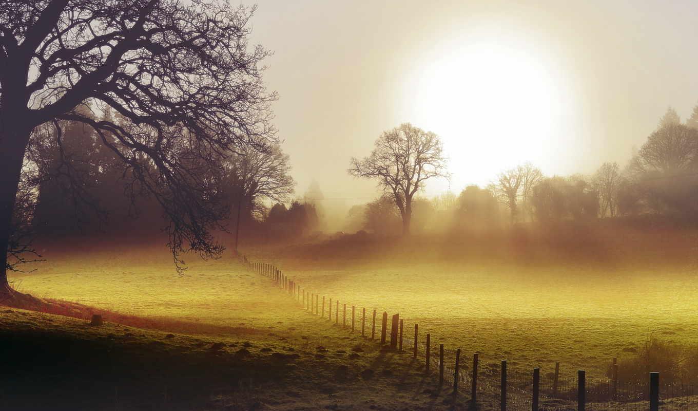 туман, поле, утро, забор, landscape,