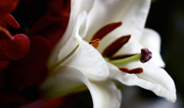 lily, крупным, красавица, планом, мелкая, best, mixed, февр,