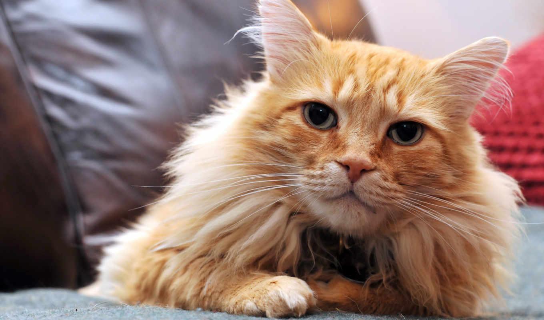 кот, images, bipedi, definition, high, cats, mobile, hvga,