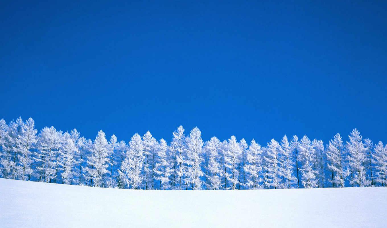 winter, пейзаж, desktop, деревья,