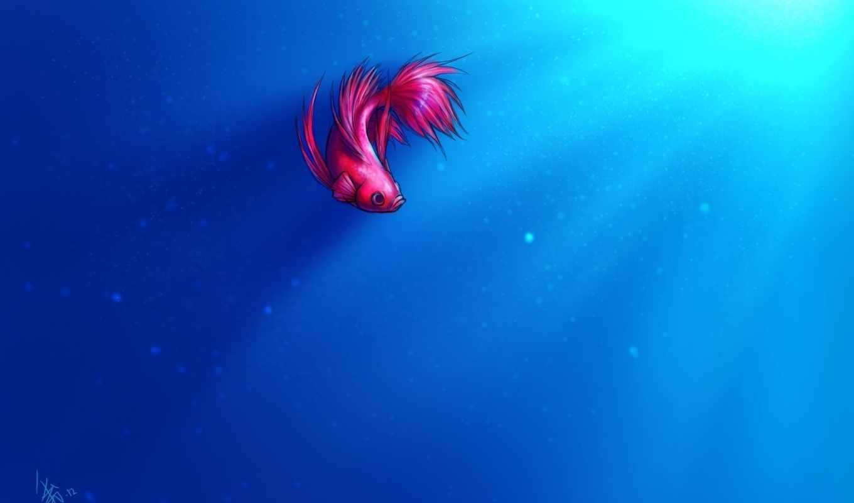 пузырьки, свет, арт, рыба, петушок, картинка, картинку, oomizuao,