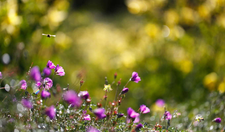 цветы, summer, bumblebee, природа, макро,