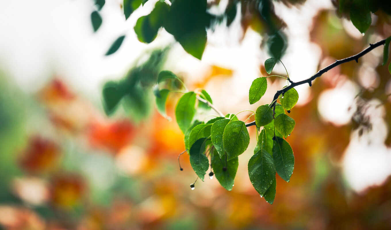 free, leaves, download, winter, this, widescreen, resolution,