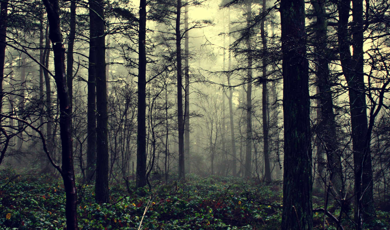 лес, природа, туман,