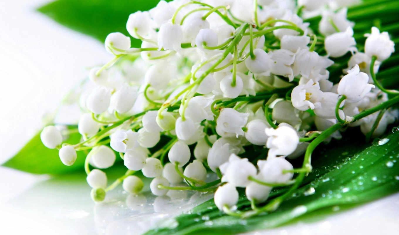 ландыши, цветы, цветов, lily,