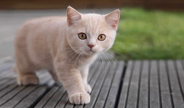 котенок, кошки, светлого, котенка, кошек, пушистый, смотреть, свет, дек,
