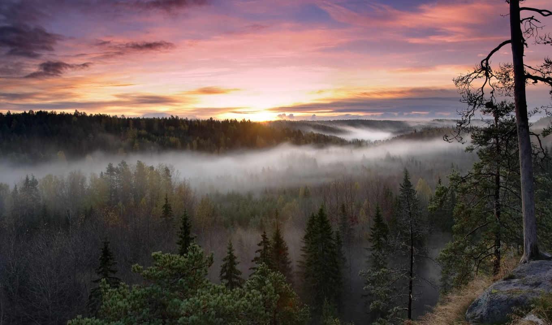 финляндия, national, park, noux, лес, картинка, восход, флот, нууксио,
