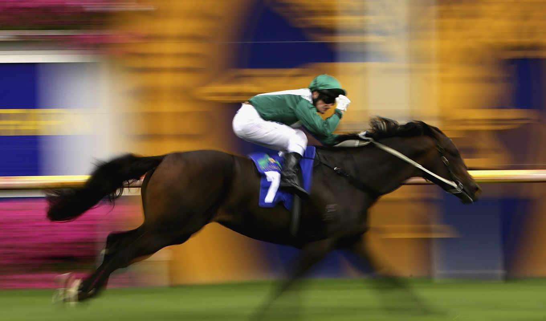 спорт, лошадь, всадник, коннный, лошадей,
