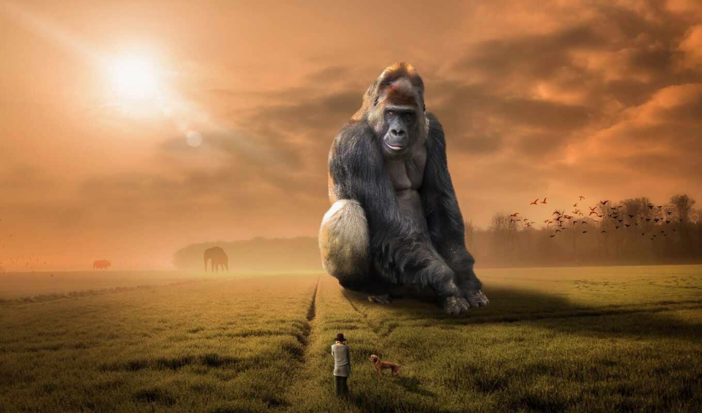 animal, обезьяна, world, горилла, рука, sit