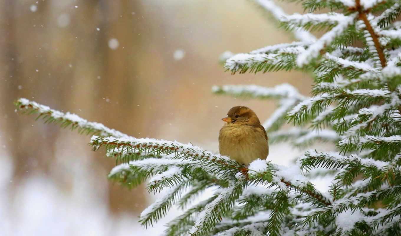 winter, природа, птицы, темы, зимой, дек,