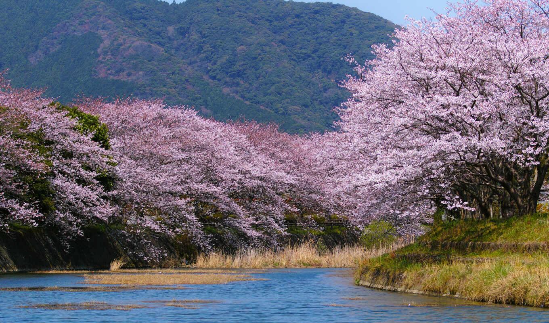 весна, япония, Сакура, цветение, река, город,